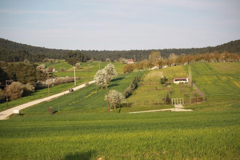 skourta-eikones